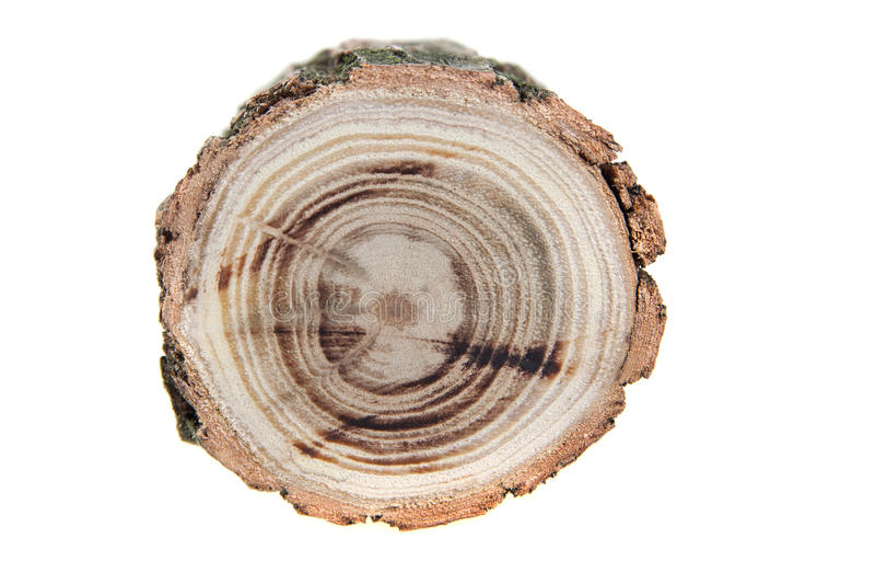Section transversale de tronçon d'arbre photographie stock libre de droits
