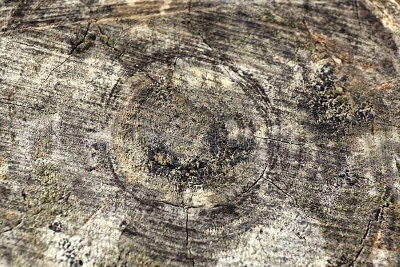Section transversale de tronc d'arbre, plan rapproch? photo stock