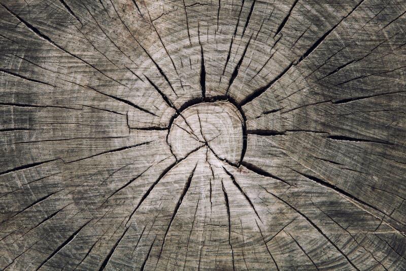 Section transversale en bois de tronc avec des fentes bois et des cercles concentriques d'anneaux images libres de droits