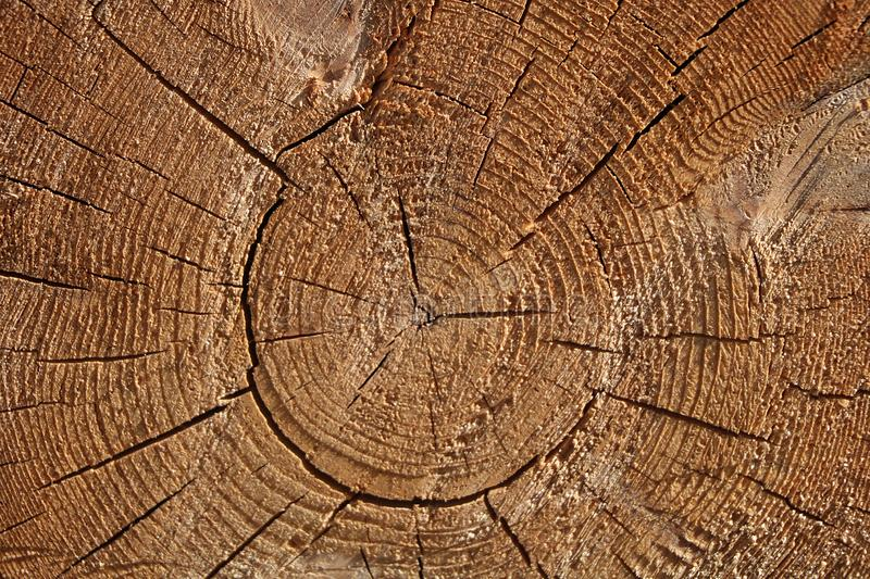 A section of a wooden trunk with cracks and annual rings for use as a background or texture. Brown light patterns against a background of natural origin stock photos