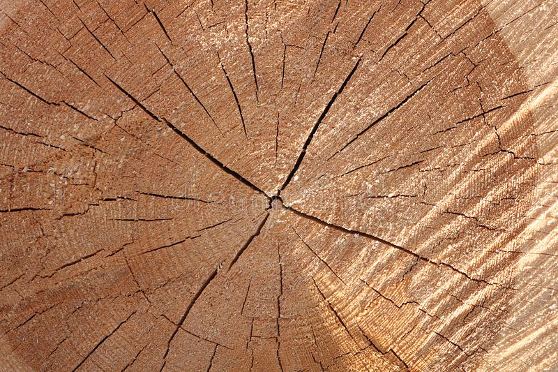A section of a wooden trunk with cracks and annual rings for use as a background or texture. Brown light patterns against a background of natural origin royalty free stock photo