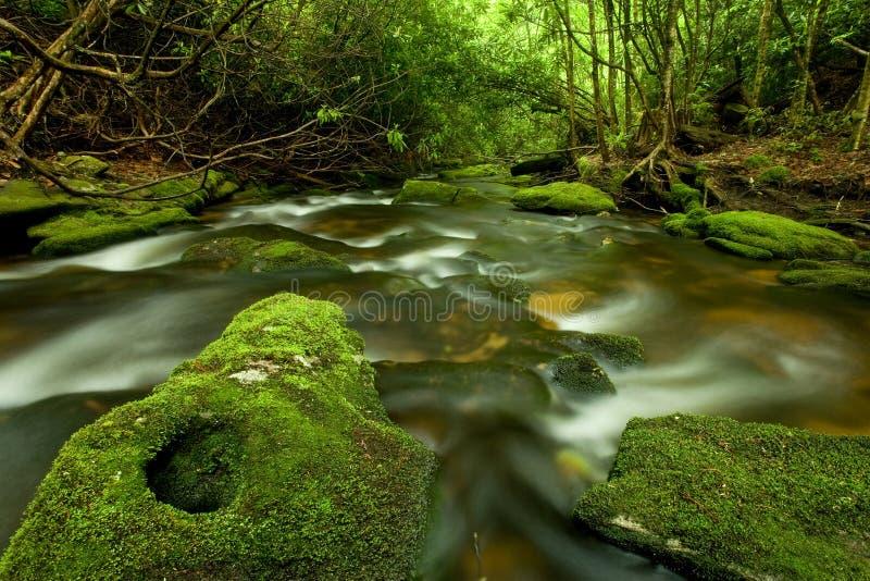 Secuencia de la selva tropical foto de archivo libre de regalías