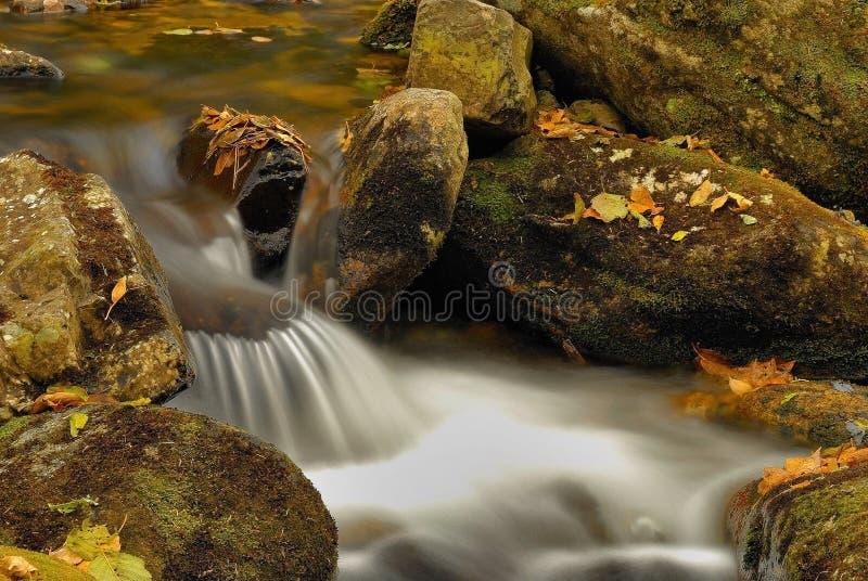 Download Secuencia de Taiga. foto de archivo. Imagen de flujo, caída - 7283058