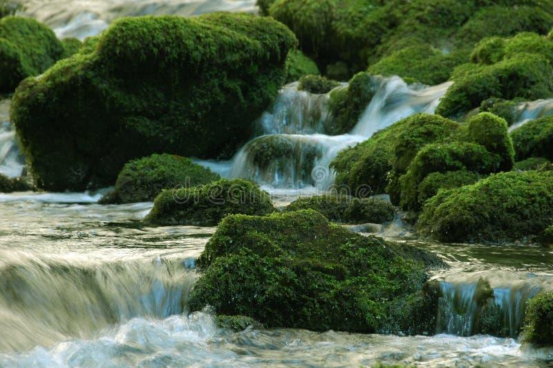 Secuencia del agua dulce imagen de archivo libre de regalías