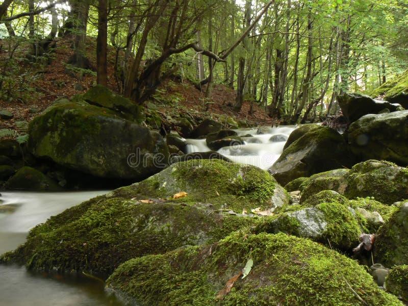 Secuencia del río de la montaña fotos de archivo libres de regalías