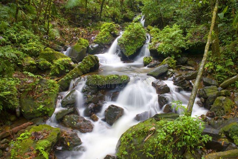Secuencia del río del EL Yunque fotografía de archivo libre de regalías