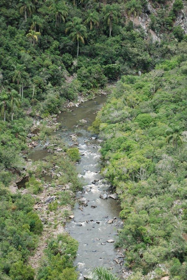 Secuencia en bosque tropical imagen de archivo