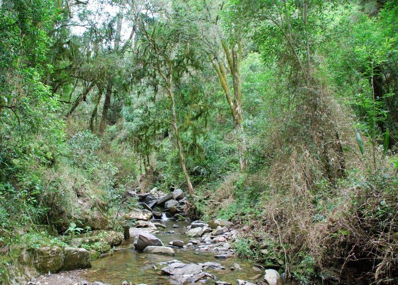 Secuencia en bosque tropical fotos de archivo
