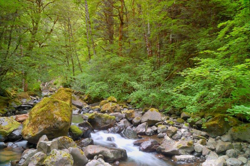 Secuencia en el bosque fotos de archivo