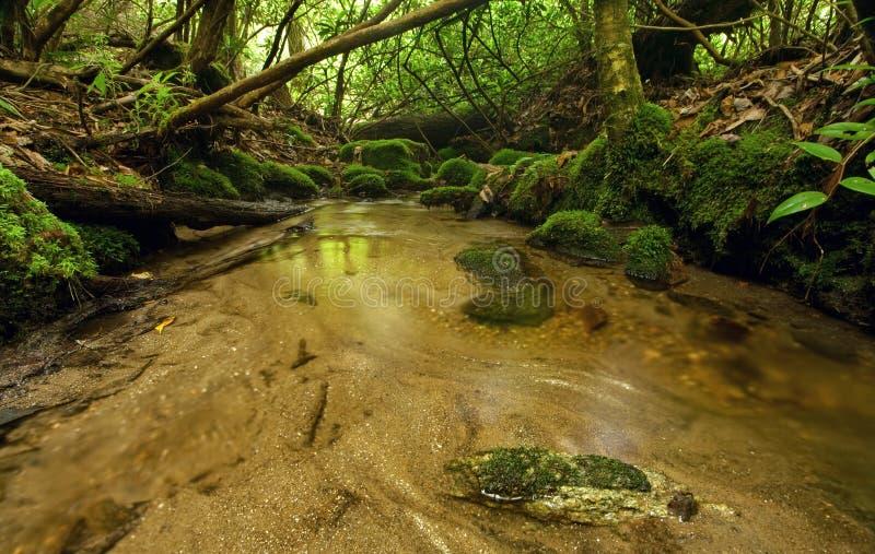 Secuencia enorme de la selva tropical fotografía de archivo