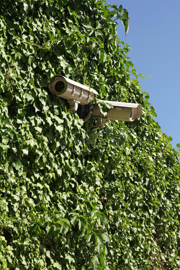Security cameras on ivy covered wall. With blue sky in the background royalty free stock photo