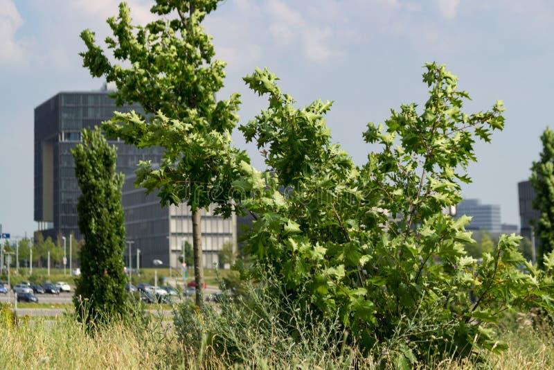 Sede de Krupp com as árvores na frente dela imagem de stock