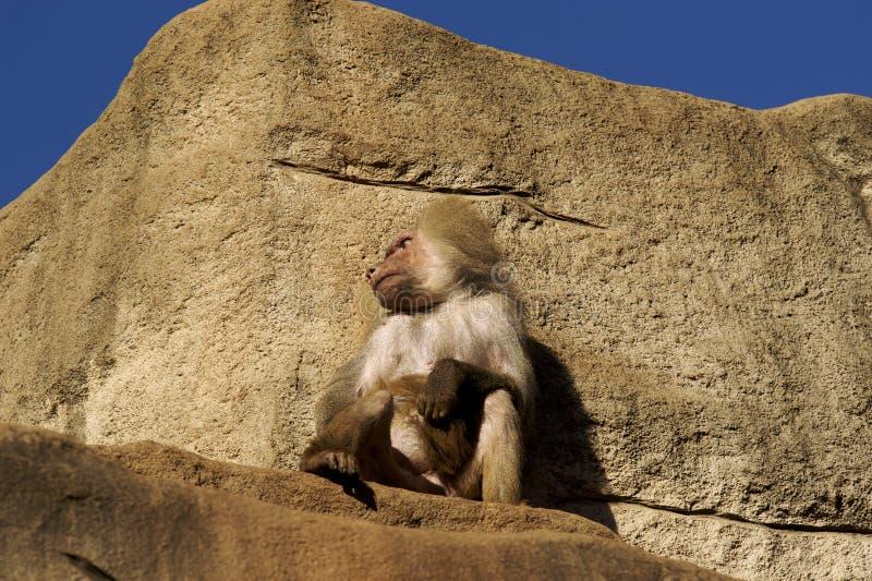 Sedendosi sulla parte superiore una roccia fotografia stock libera da diritti