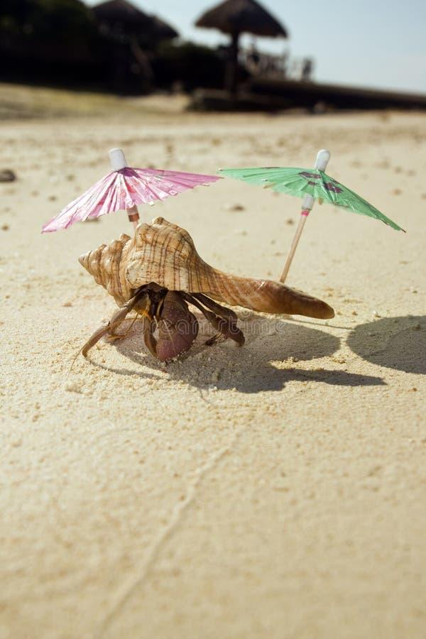 Sedere della spiaggia del granchio dell'eremita fotografia stock