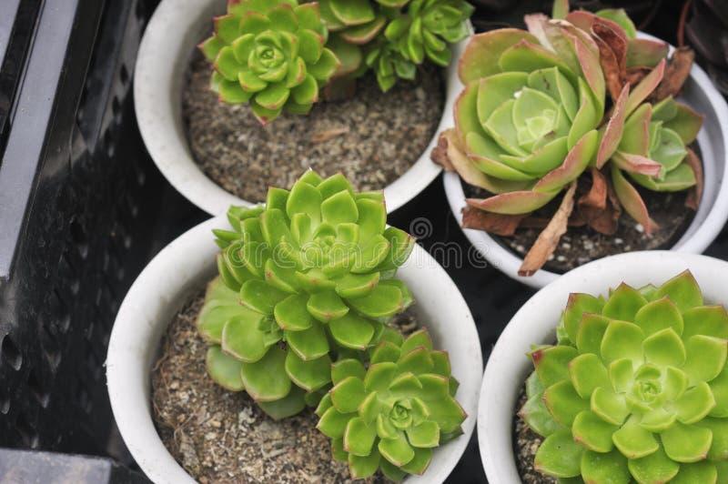 Succulent Plants In Flowerpot Stock Photo Image Of Flowerpot Plants 45970098