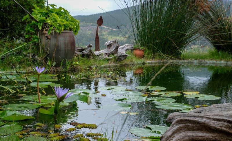 Sedgefield, ogród trasa, Południowa Afryka: ustronny ogród z leluja stawem i widokiem otaczający wzgórza w odległości zdjęcie stock