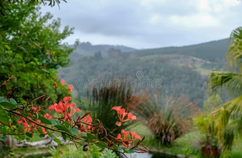 Sedgefield, Tuinroute, Zuid-Afrika: afgezonderde tuin met vijver en mening van de omringende heuvels in de afstand royalty-vrije stock fotografie
