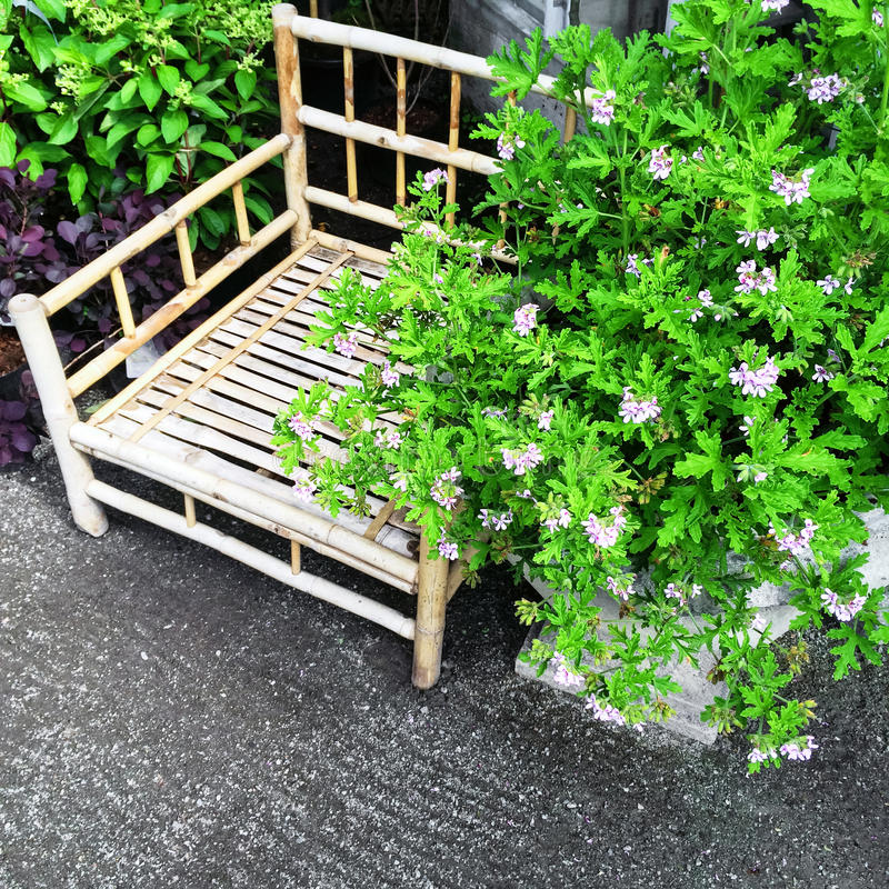 Sedia di bambù e piante di fioritura fotografie stock