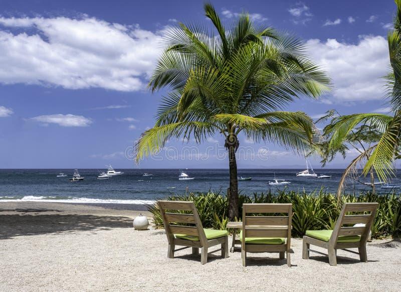 Sedie di spiaggia e palma sulla spiaggia dell'oceano con lo spazio della copia immagine stock