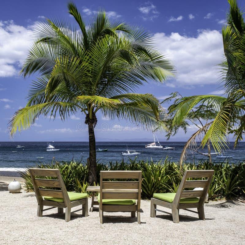 Sedie di spiaggia e palme sulla spiaggia dell'oceano fotografia stock