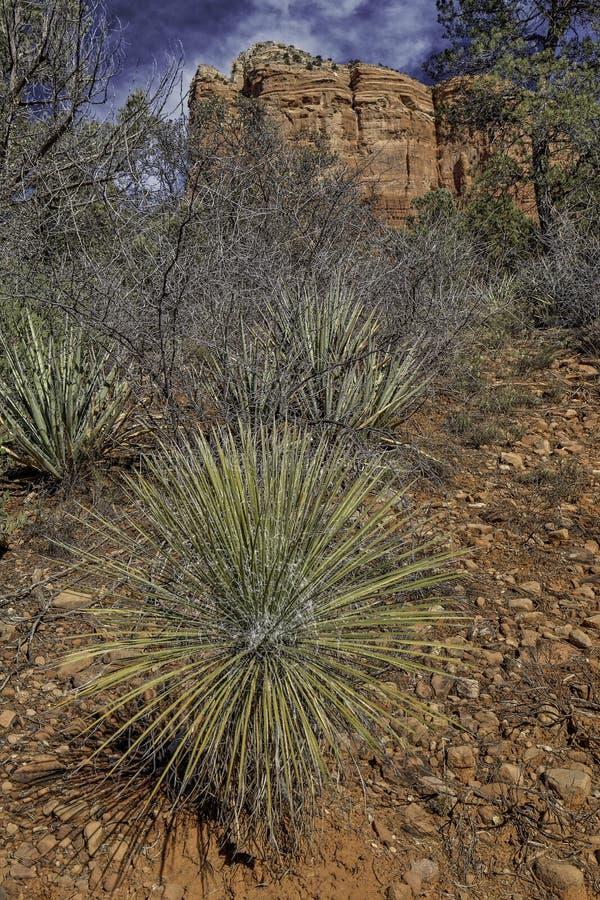 Sedona,亚利桑那在冬天 免版税库存图片