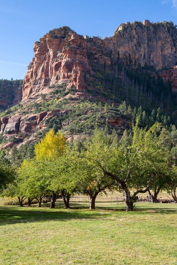 Sedona e paisagens da garganta da angra do carvalho fotografia de stock royalty free