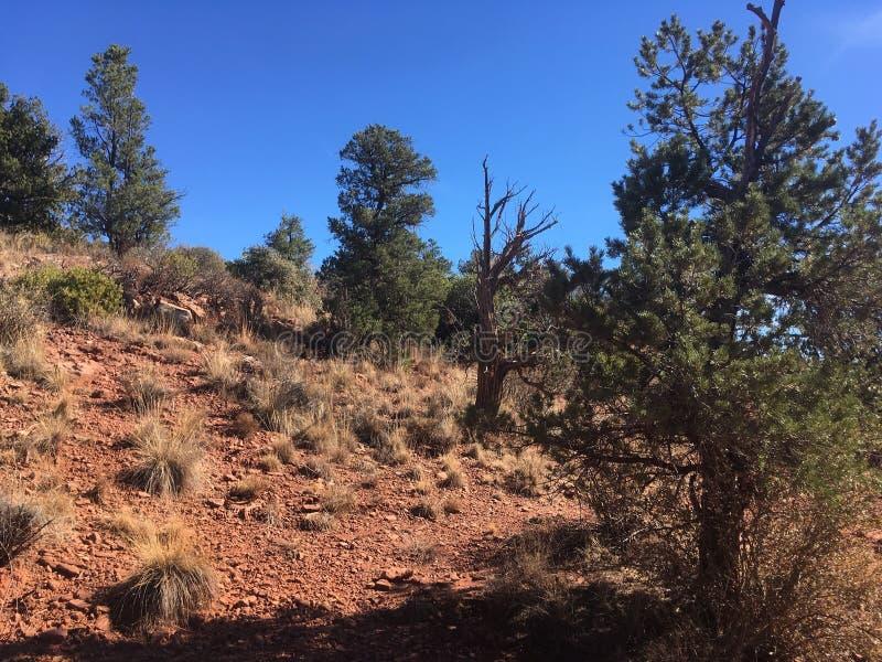 Download Sedona Rode Rots Wandelingsslepen Stock Foto - Afbeelding bestaande uit rots, stijging: 107706594