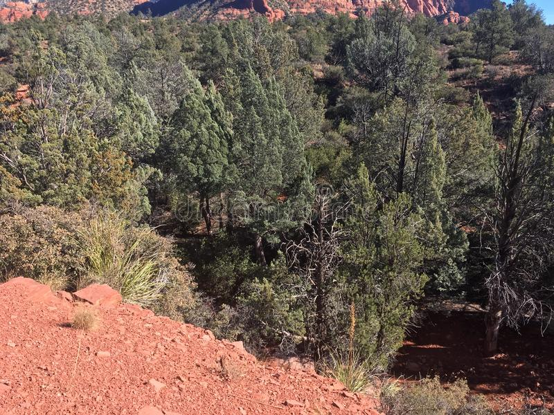 Download Sedona Rode Rots Wandelingsslepen Stock Foto - Afbeelding bestaande uit landschappen, hout: 107708530