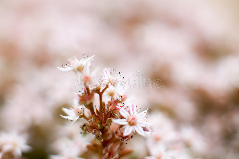 Roof Sedum Images Download 896 Royalty Free Photos Page 2
