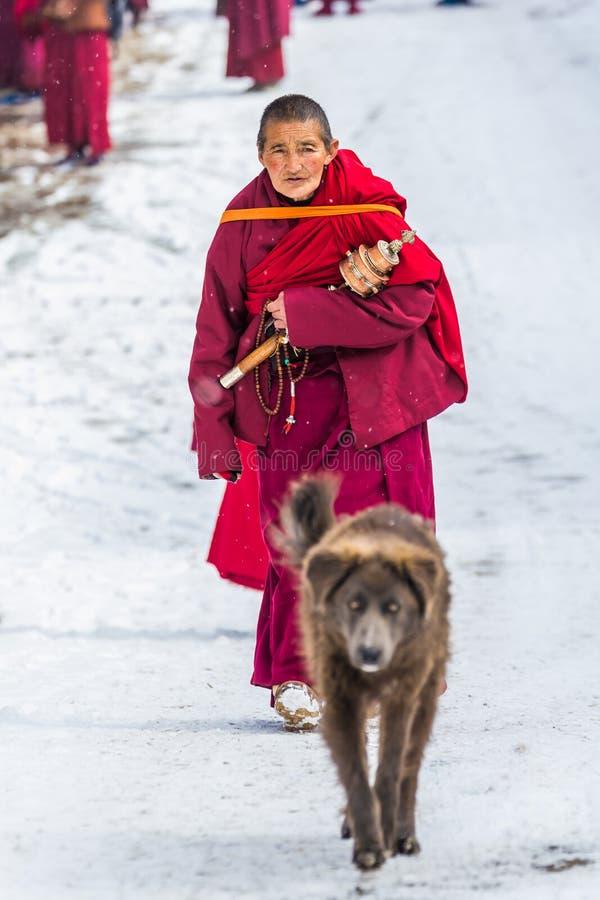 Sedums, Sichuan, porcelaine-mars 08,2016, moines ? l'universit? buddhish de sedums images libres de droits