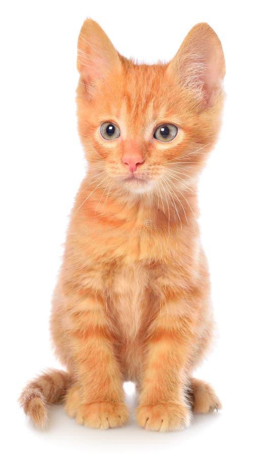 Seduta arancio del gattino immagini stock
