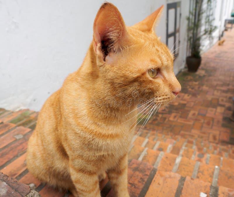 Seduta arancio del gatto che guarda alla destra immagini stock libere da diritti