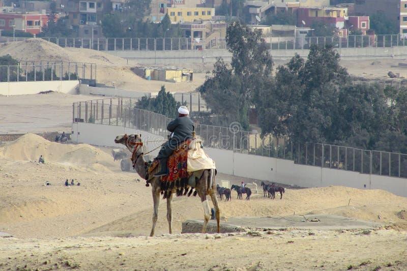 Seduta beduina su un cammello e guardare il cantiere nel deserto immagine stock