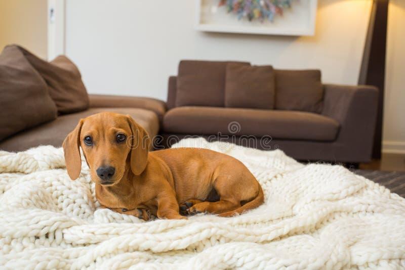 Seduta del cane fotografia stock