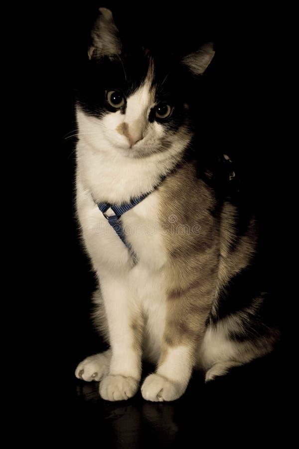 Seduta del gattino immagini stock
