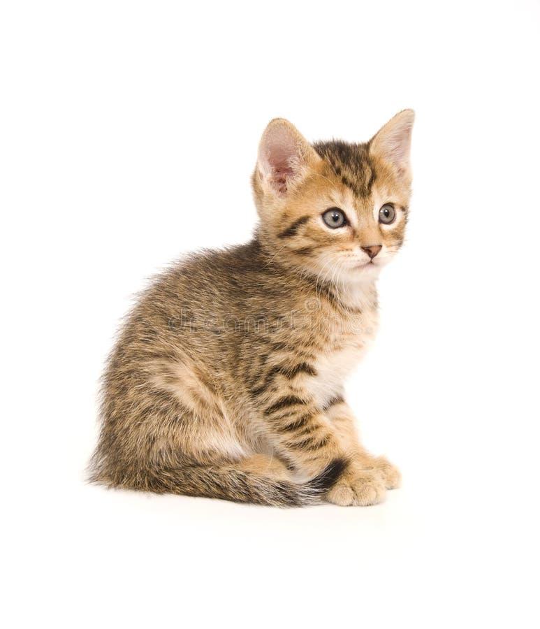 Seduta del gattino del Tabby immagini stock