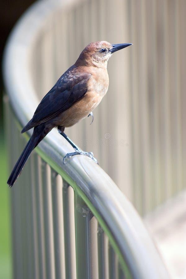 Seduta dell'uccello fotografia stock