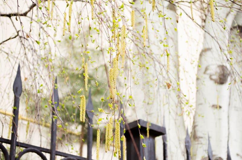 See Baikal auf Hintergrund Birke und Himmel Ohrringbirke Zaun Der Baum hinter dem Zaun Baum Schlie?en Sie herauf Schu? Blauer Him lizenzfreies stockbild
