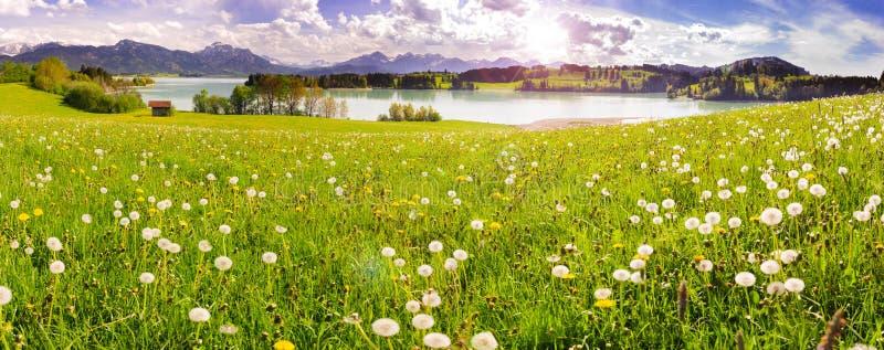See Forggensee und Alpenberge im Bayern am Frühjahr stockfotografie