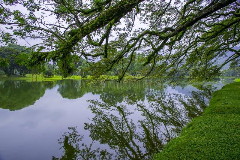 See-Garten, Taiping stockbild