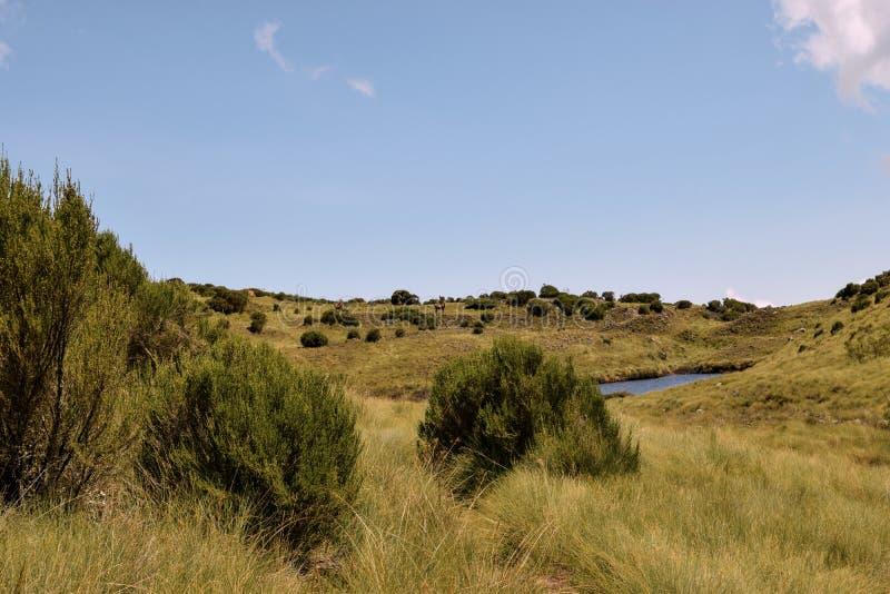 See gegen das Heidemoor der gro?en H?he an der Mount Kenya lizenzfreies stockbild