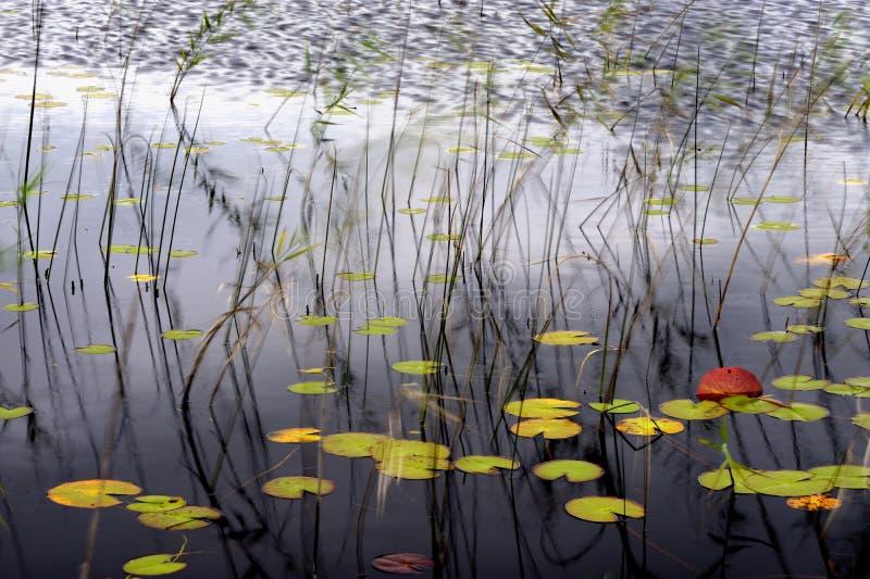 See im Herbst stockfotos