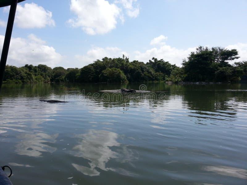 See im Vogelschutzgebiet stockbilder