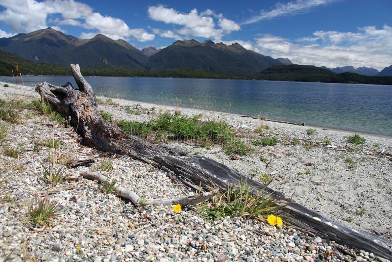 See Manapouri lizenzfreie stockbilder