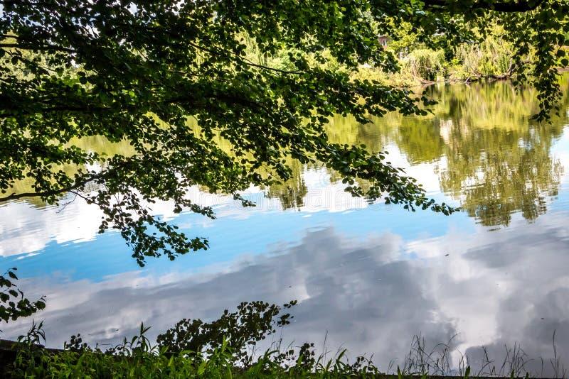 See mit Bäumen und Wolkenreflexion stockbild