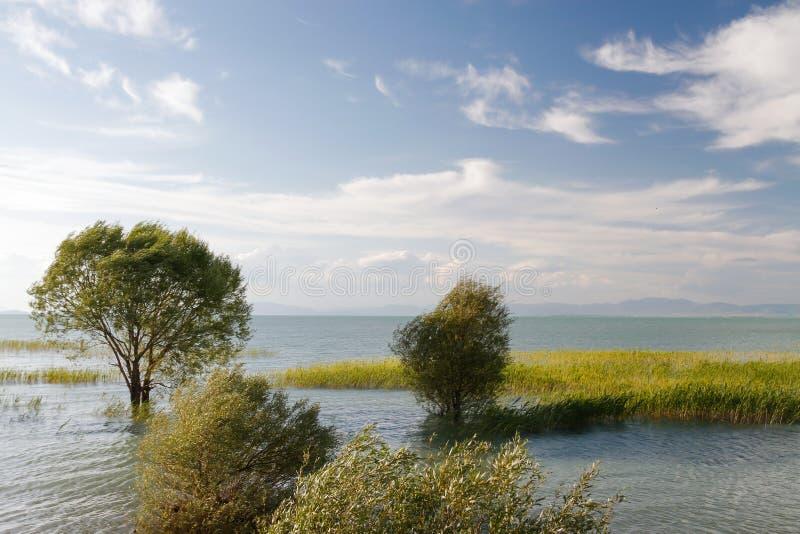 See mit Baum auf Wasser stockfoto