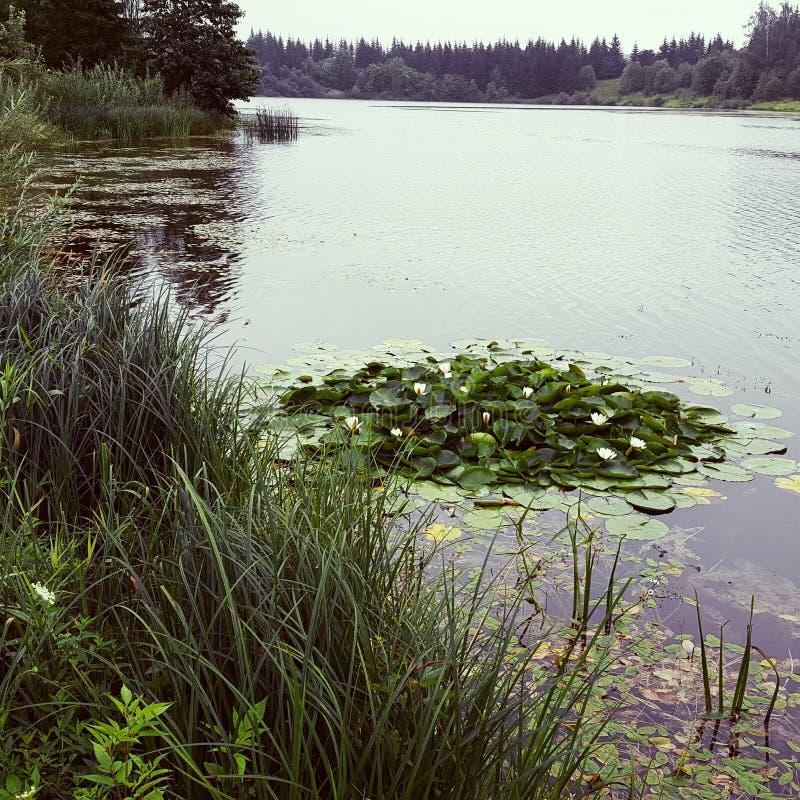 See mit Wasserlilien stockfotos