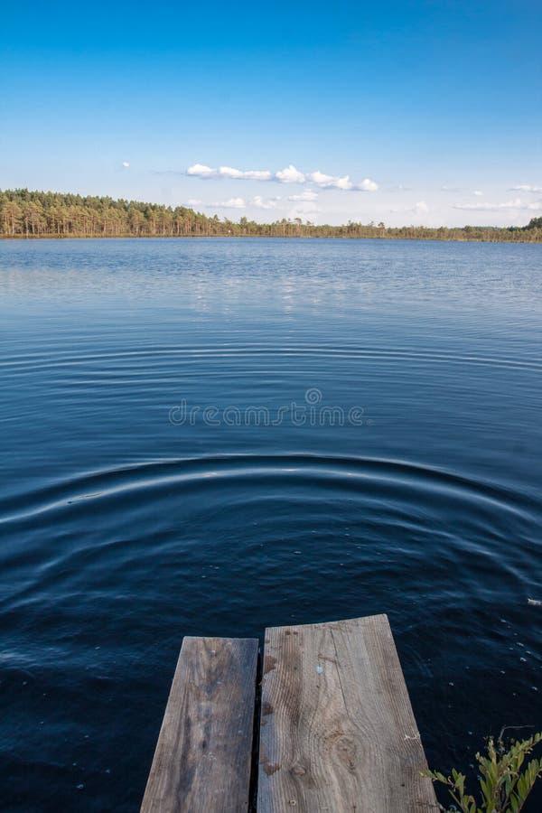 See Mustjarv stockfoto