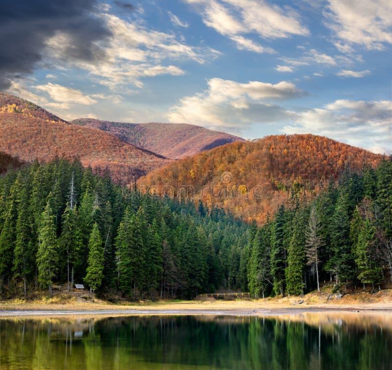 See nahe dem Berg im Kiefernwald lizenzfreies stockbild