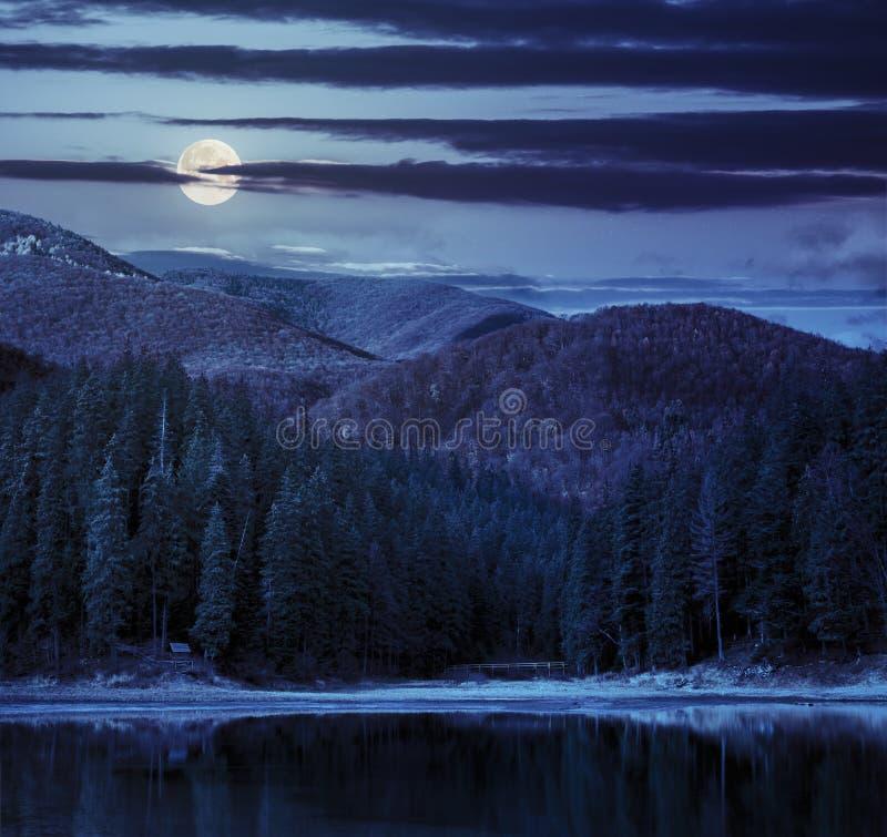 See nahe dem Berg im Kiefernwald nachts lizenzfreies stockfoto